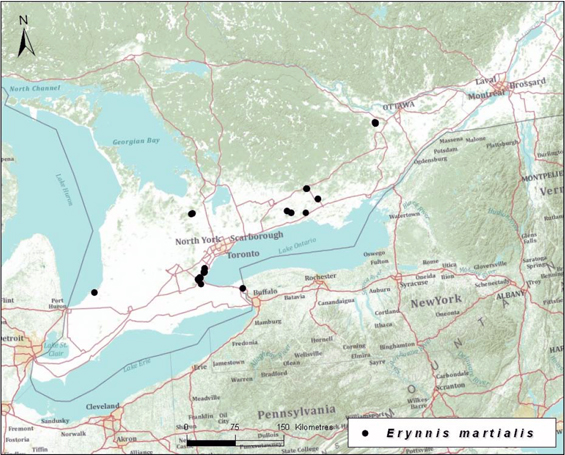 Map illustrating the Canadian records of the Mottled Duskywing (Great Lakes Plains population).