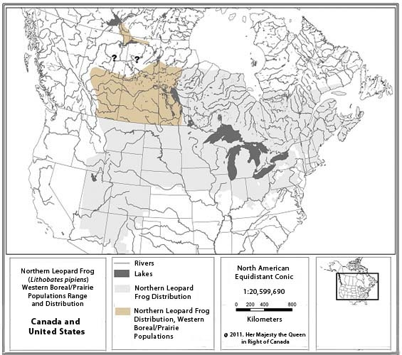 Figure 1 shows the global distribution off the Northern Leopard Frog, covering an important area in North America (from Nova Scotia to Manitoba down to northern and central United States). The figure also includes the representation of the Western Boreal/Prairie Populations in a different color.