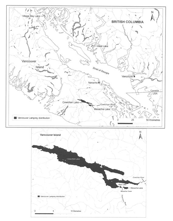 Two maps showing the distribution of the Vancouver Lamprey in Cowichan and Mesachie Lakes. One map shows the location of the lakes on Vancouver Island, and the other shows the lakes in more detail.