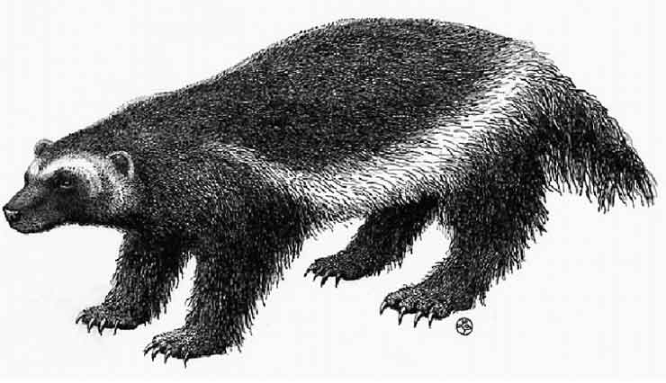 Illustration of the Wolverine