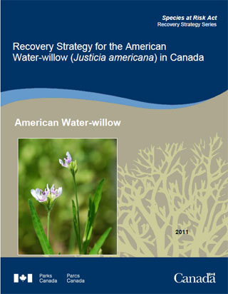 Species at Risk Act recovery strategy series, recovery strategy for the American Water-willow (Justicia americana) in Canada.