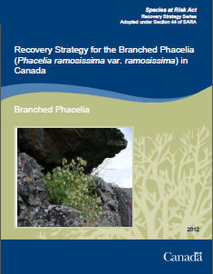 Cover page of the publication: Recovery Strategy for the Branched Phacelia (Phacelia ramosissima var. ramosissima) in Canada – 2012.
