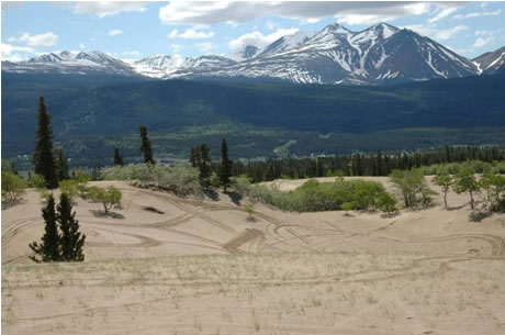 Photo of dunes 2 kilometres north of Carcross, along the Klondike Highway.