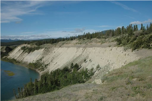 Photo of aeolian sand  and active dunes on top of lacustrine silt cliffs eroded by the Yukon River, 5  kilometres north of Whitehorse.