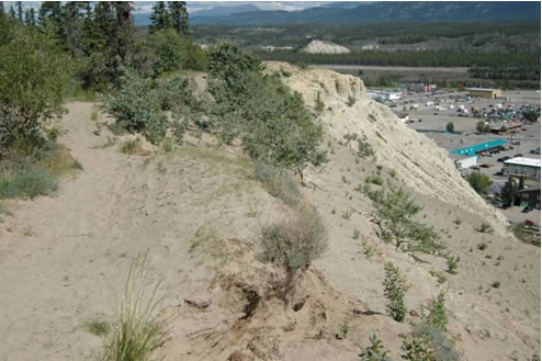 Photo of stabilized aeolian sand dunes and small blowouts on top of  silt bluffs, west of downtown Whitehorse.