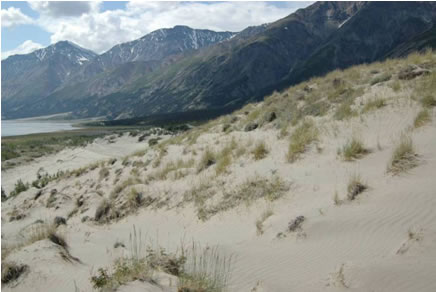 Photo of dunes at the confluence of Bullion Creek and Slims River, Kluane National Park and Reserve.