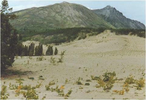 Photo of the northern section of the Carcross dunes, east of the Klondike Highway, taken in August 1984.
