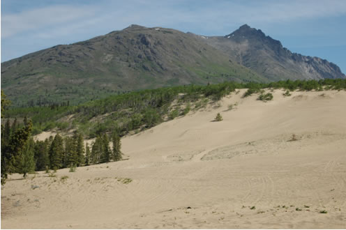 Photo of the northern section of the Carcross dunes, east of  the Klondike Highway, taken in June 2010. Compared with the photo from August 1984 (shown in Figure 24), this photo shows increased disturbance, smaller patches of vegetation, and  the virtual absence of vegetation on steeper, open slope.