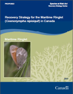 Cover of the publication: Recovery Strategy for the Maritime Ringlet (Coenonympha nipisiquit) in Canada [PROPOSED] – 2011