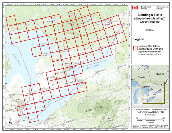 map showing critical habitat for the Blanding's Turtle, Great Lakes / St. Lawrence Population