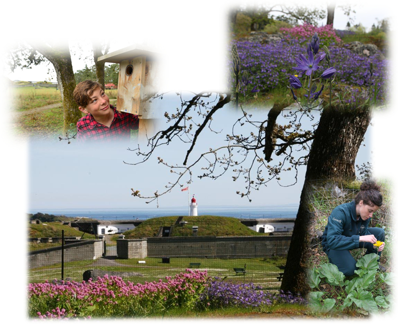 This is a collage of 4 photos. The first photo is a person looking at a birdhouse. The second photo is of a violet flower. The third photo is of Fort Rodd Hill. The fourth photo is a person in a garden.