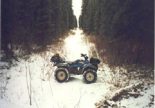 Photograph of an all-terrain vehicle parked across a line cut through the boreal forest. Copyright: Applied Ecosystem Management 1999 (Photo: R. Anderson and K. Kranrod)