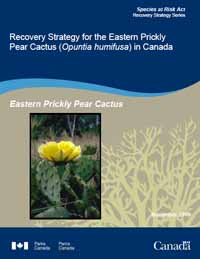 Species at Risk Act Recovery Strategy Series Recovery Strategy for the Eastern Prickly Pear Cactus (Opuntia humifusa) in Canada Eastern Prickly Pear Cactus March 2010