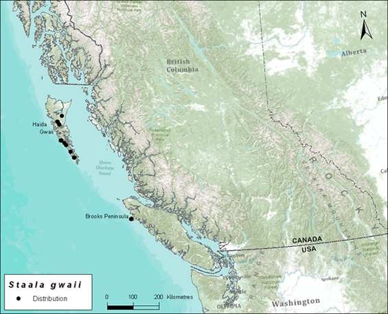 Map showing the global distribution of the Haida Gwaii Slug (see long description below).