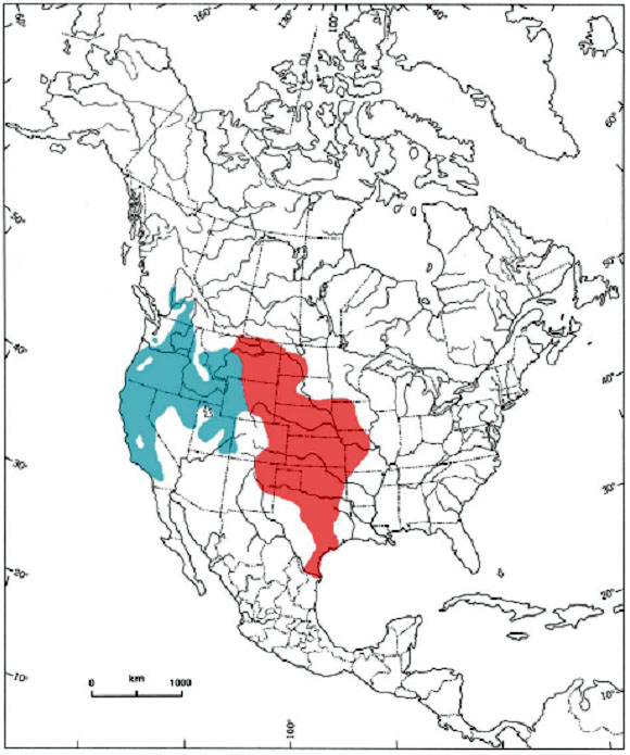 Figure 1. Global distribution of Coluber constrictor mormon outlined in blue; Coluber constrictor flaviventris outlined in pink (COSEWIC 2004) (See long description below)