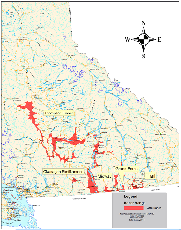 Figure 2. Racer distribution in British Columbia. (Grassland Conservation Council, unpublished data, 2010). (See long description below)
