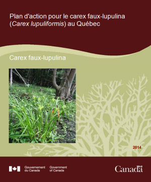 Cover: Action Plan for the Forked Three-awned Grass (Aristida basiramea) in Ontario