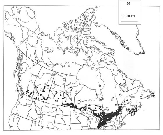 Map showing the distribution of the Monarch in Canada.