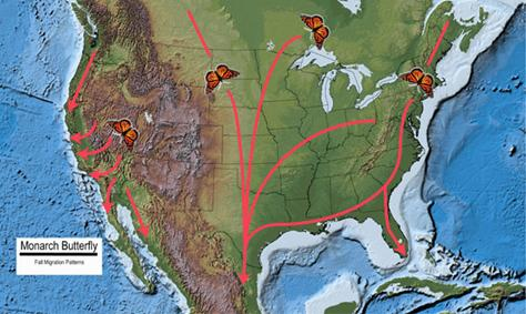 Two maps illustrating the paths taken by Monarch butterflies during the fall (Map A) and spring/summer (Map B) migrations.