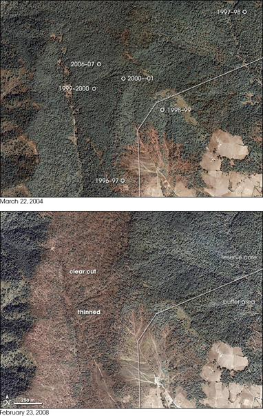 Two aerial photos of part of the core and buffer regions of a Monarch preserve in Mexico in 2004 (top photo) and 2008 (bottom photo). Comparison of the photos shows the loss of forest in the core area. The top photo also shows the locations of overwintering sites in different years and clearly indicates that these areas move.