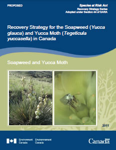 Cover of publication: Recovery Strategy for the Soapweed (Yucca glauca) and Yucca Moth (Tegeticula yuccasella) in Canada [PROPOSED] - 2011