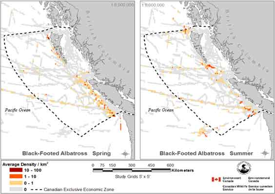 Map showinig average grid cell densities of Black-footed Albatross in Canadian waters.  See detailed image description below