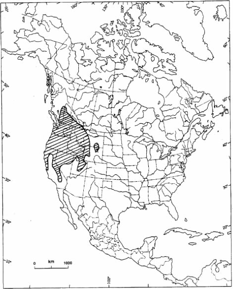 Map shows the North American range of the Northern Rubber Boa