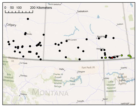 Map of sites searched for the Greenish-white Grasshopper in Alberta, Saskatchewan and areas near the Saskatchewan-Manitoba border in 2010 (see long description below).