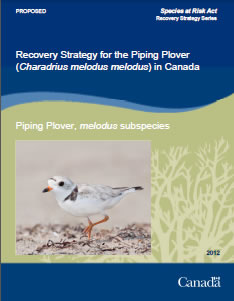 Cover of publication: Recovery Strategy for the Piping Plover (Charadrius melodus melodus) in Canada [PROPOSED] - 2012