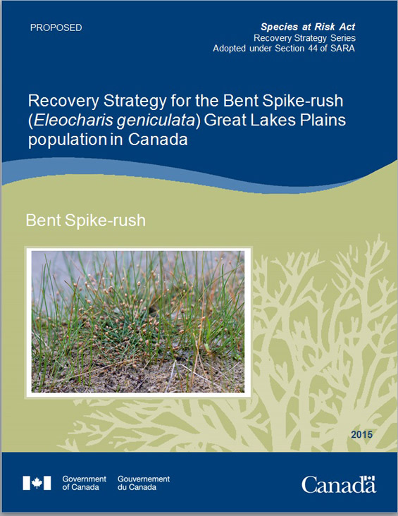 Cover page of Bent Spike-rush