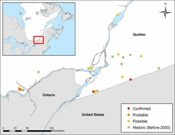 Figure 3 is a map of the breeding occurrences of Cerulean Warbler in southern Quebec. Confirmed, probable, possible and historic presence of breeding individuals at observation stations is indicated. The data is from Suivi de l'occupation des stations de nidification des populations d'oiseaux en péril du Québec