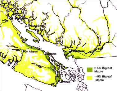 Map shows the distribution of Bigleaf Maple