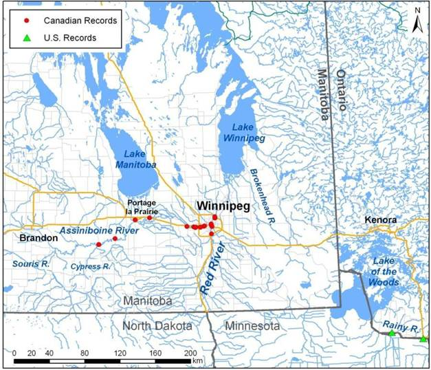Map showing records of the Riverine Clubtail in Manitoba (see long description below).