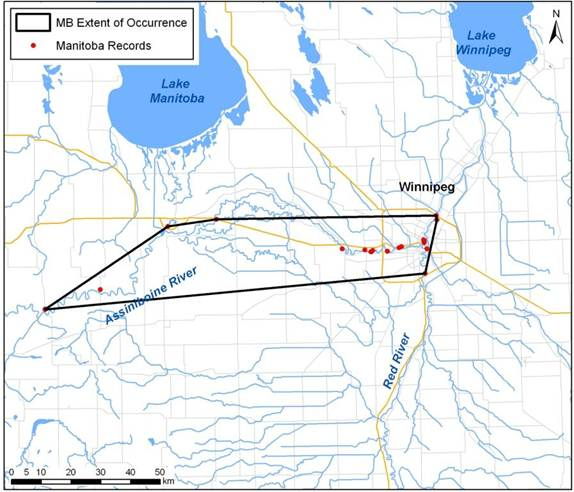 Map showing extent of occurrence (area encompassed by black line) for the Riverine Clubtail in Manitoba.