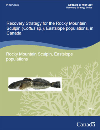 Species at Risk Act recovery strategy series, recovery strategy for the Rocky Mountain Sculpin (Cottus sp.), Eastslope populations, in Canada.