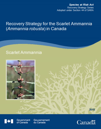 Cover Page for Scarlet Ammannia