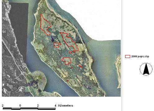 Aerial photo showing core areas of occupancy for Taylor's Checkerspot on Denman Island.