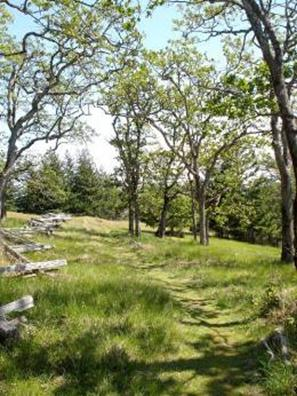 Photo of Garry Oak habitat on private property adjacent to Helliwell Provincial Park, Hornby Island.