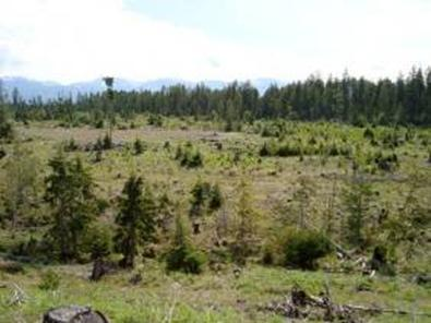 Photo of open, wet disturbed clearcuts and marshy areas on central Denman Island.