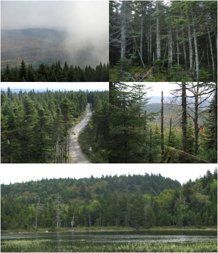 Panel of five photos of Canadian locations of Pseudevernia cladonia discovered between 2006 and 2009.