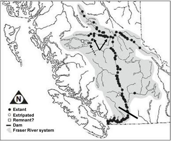 Map of the distribution of the White Sturgeon (see long description below).