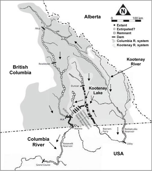 Distribution of the White Sturgeon (see long description below).