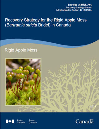 Species at Risk Act recovery strategy series, recovery strategy for the Rigid Apple Moss (Bartramia stricta Bridel) in Canada.