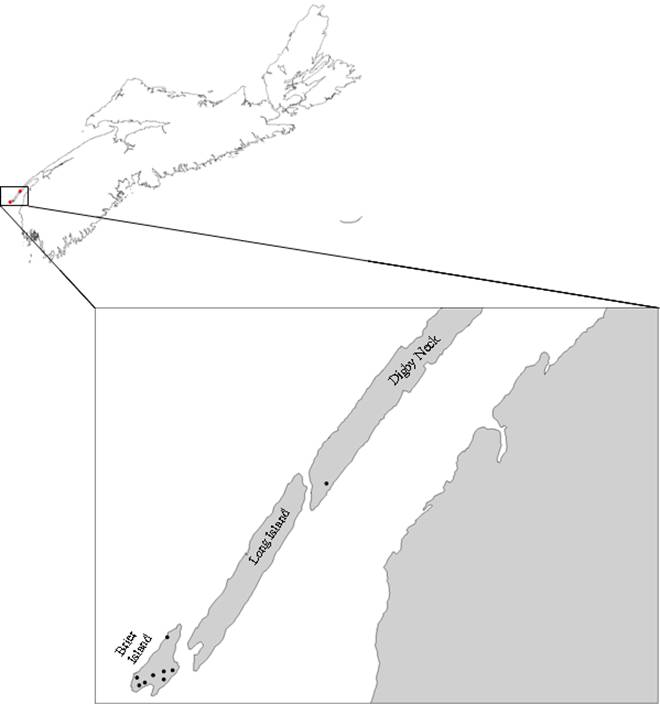 Appendix A is a visual representation of the 9 known sites where Eastern Mountain Avens occurs as of August 2008. The sites are shown on a section of the map of Nova Scotia: 8  sites on Brier Island and 1 site is at  Digby Neck.