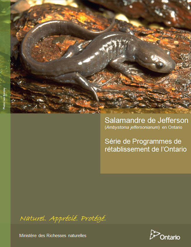 Programme de rétablissement de la salamandre de Jefferson en Ontario. Description suit