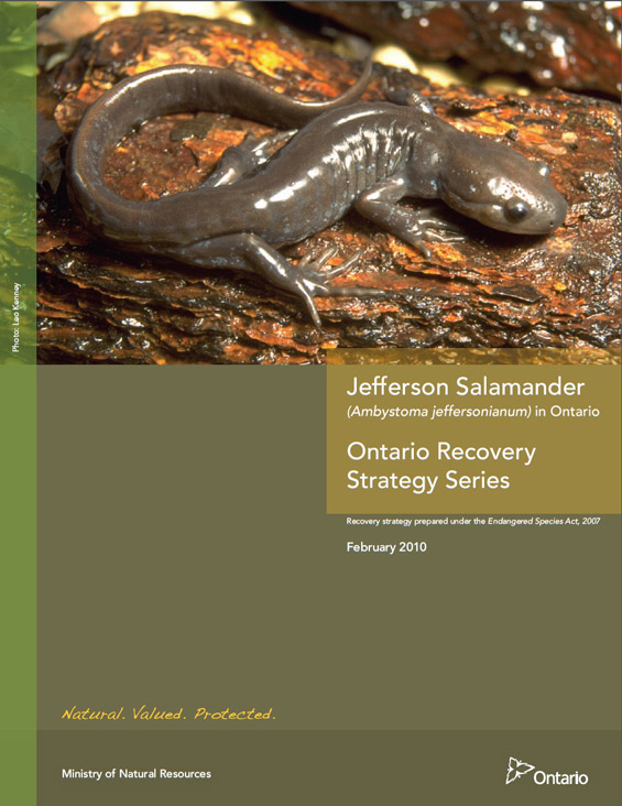 Cover page of Jefferson Salamander