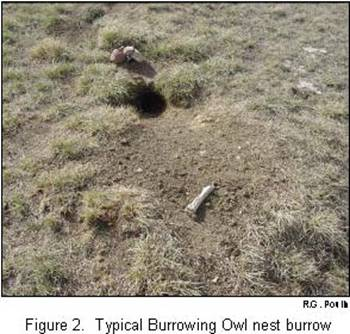 The nest burrow:physical appearance and context. R.G. Poulin