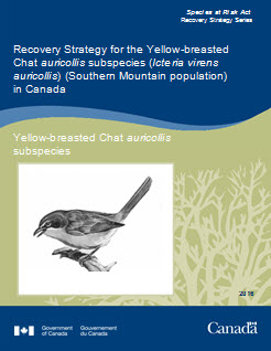 Cover of the publication: Recovery Strategy for the Yellow-breasted Chat auricollis subspecies (Icteria virens auricollis) (Southern Mountain Population) in Canada - 2014 [Proposed]