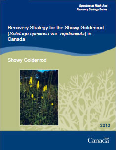 Cover of the publication: Recovery Strategy for the Showy Goldenrod (Solidago speciosa var. rigidiuscula) in Canada – 2012