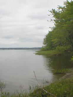Photo of Skillet Clubtail habitat on the Saint John River at Fredericton, looking upstream.